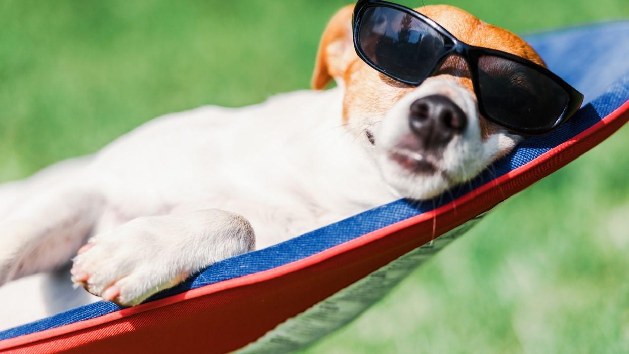Cachorro Com Calor 10 Dicas Para O Refrescar Happy Pets Stuff