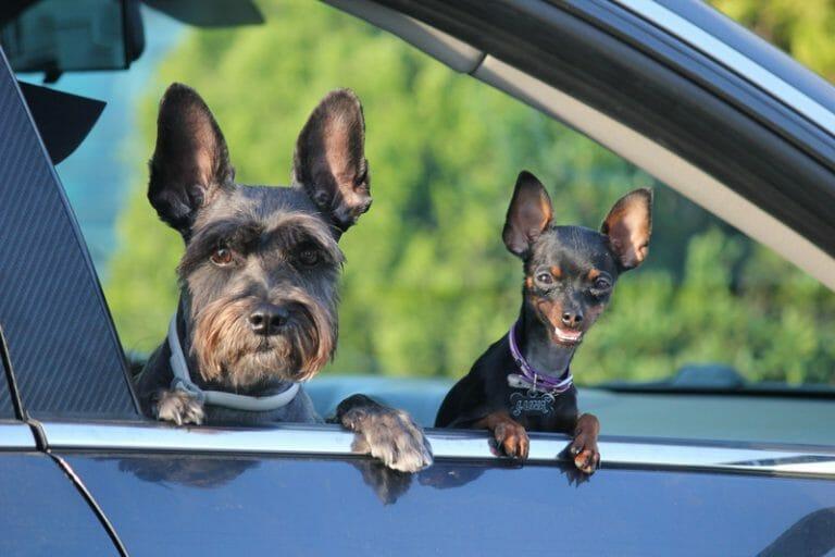 Caixas Transporte Cães Automóvel em 2020