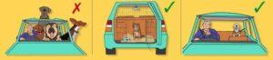 caixas transporte cães segurança