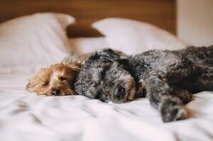 melhor-cama-para-cachorro 3