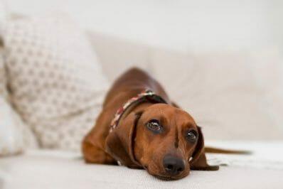 melhor-cama-para-cachorro