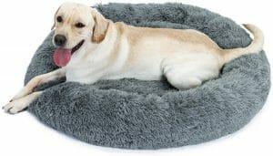 melhor-cama-para-cachorro eono