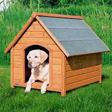 casinha de cachorro grande 2020