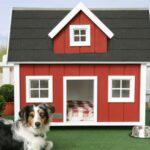 Casinha de Cachorro Grande,Médio e Pequeno 2020