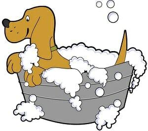 banho e tosa 3