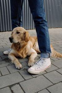 carrinho para cães deitado