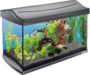 como montar aquário 60 litros