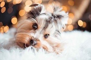 fraldas para cães descartáveis