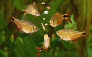 comida para peixe de aquário
