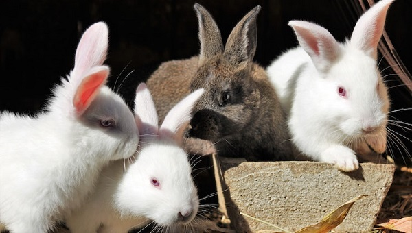 Loja de coelhos online