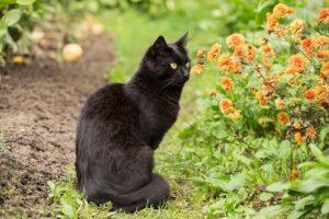 como-afastar-gatos-do-jardim