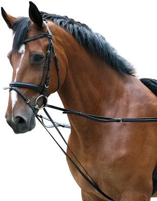 Rédeas para cavalos