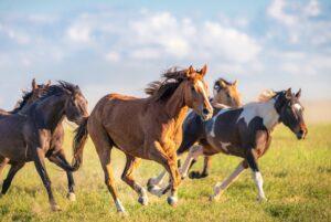tudo-sobre-cavalos-tipos