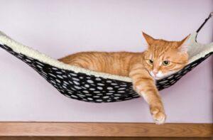 camas-de-rede-para-gatos